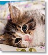 Little Cat Kitten Metal Print