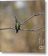 Lone Hummingbird Metal Print
