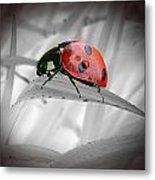 Lone Ladybug Metal Print