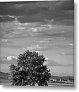 Lone Tree Wilder Idaho Metal Print