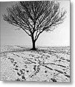 Lone Tree Winter Metal Print