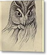 Long Eared Owl Metal Print