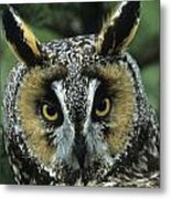 Long-eared Owl Up Close Metal Print