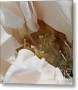 Long-stemmed White Rose Metal Print