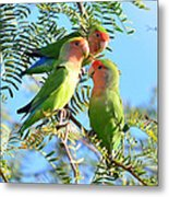 Lovebirds Metal Print