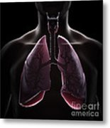 Lung Anatomy Metal Print