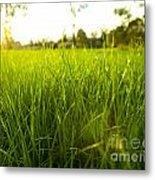 Lush Grass Metal Print