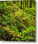Lush Temperate Rainforest Metal Print