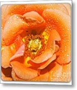 Macro Image Of A Rose Metal Print