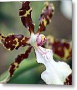 Macro Orchid Metal Print