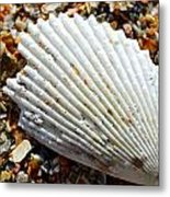Macro Shell On Sand Metal Print