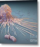 Macrophage Fighting Bacteria Metal Print