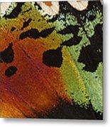 Madagascan Sunset Moth Wing Detail Metal Print