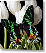 Madagascar Butterfly Metal Print