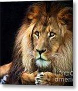 Magnificent Lion Metal Print