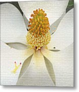 Magnolia Blossom Metal Print