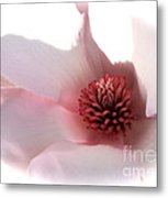 Magnolia Center Metal Print