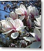 Magnolia  Twig Metal Print