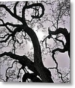 Majestic Oak Metal Print