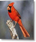 Male Cardinal Metal Print
