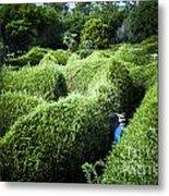 Man Lost Inside A Maze Or Labyrinth Metal Print