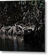 Mangrove Forest Of The Los Haitises National Park Dominican Republic Metal Print