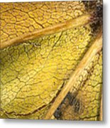 Maple Leaf Detail Metal Print