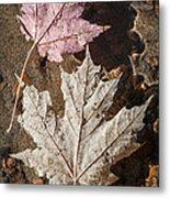Maple Leaves In Water Metal Print
