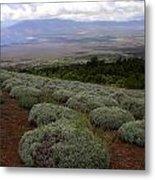 Maui Lavender Farm Metal Print