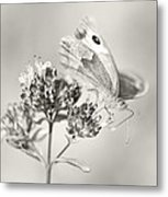 Meadow Brown Metal Print