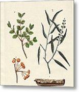 Medicinal Plants Metal Print