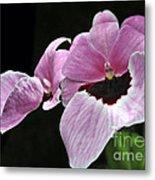 Miltoniopsis Alger Metal Print