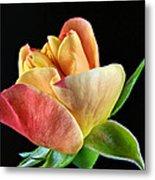 Minature Rose  Metal Print