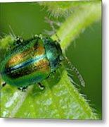 Mint Beetle Metal Print
