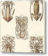 Molluscs Or Soft Worms Metal Print
