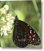 Monarch Butterfly Metal Print