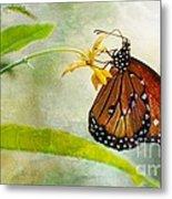 Queen Butterfly Danaus Gilippus Metal Print