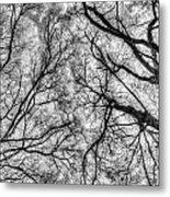 Monochrome Forest Metal Print