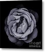 Monochrome Rose Metal Print