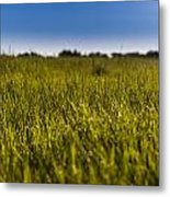 Morning Dew Metal Print