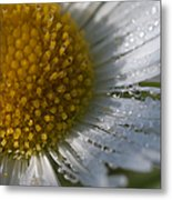 Mornings Dew Metal Print