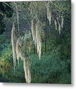 Moss Hanging Over The River Metal Print
