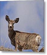 Mule Deer   #0722 Metal Print