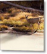 Mule Deer   #3942 Metal Print