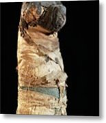 Mummified Dog From Ancient Egypt Metal Print