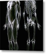 Muscles And Bones Metal Print