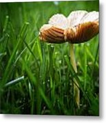 Mushroom Growing Wild On Lawn Metal Print