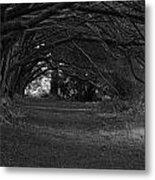 Mystical Yew Trees 1 Metal Print