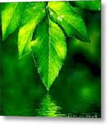 Natural Leaves Background Metal Print