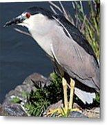 Night Heron Bird Metal Print by Diane Rada